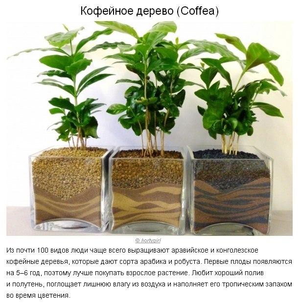 5 растений, которые забирают лишнюю влагу из воздуха