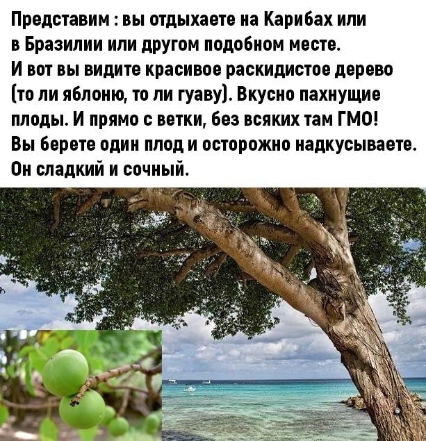Cамое опасное дерево в мире