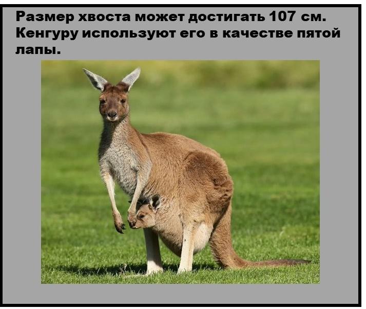 Животное, которое может запросто приостановить свою беременность.