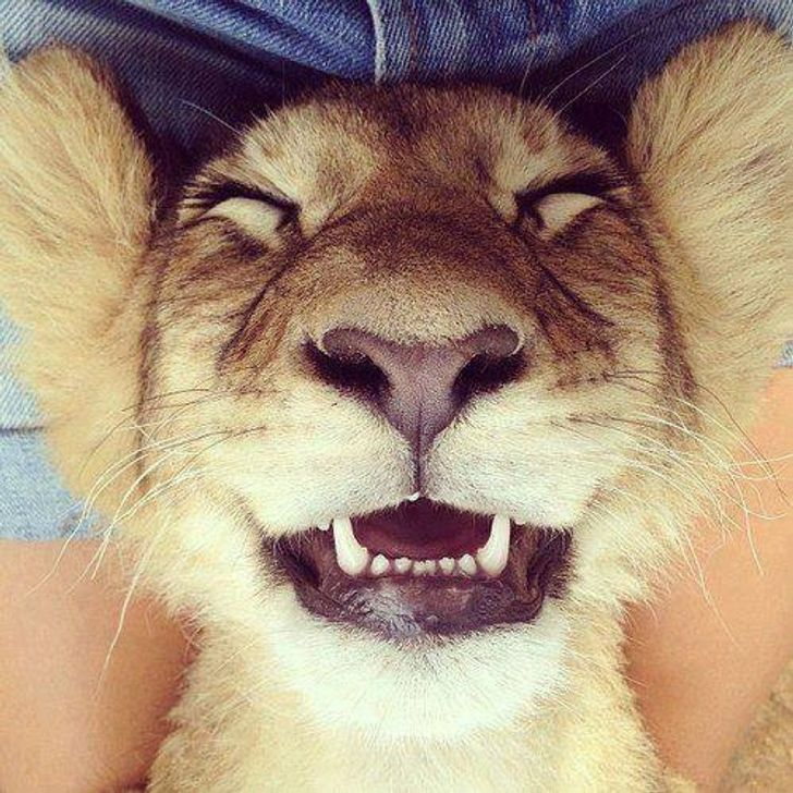Мы улыбаемся и ты улыбнись