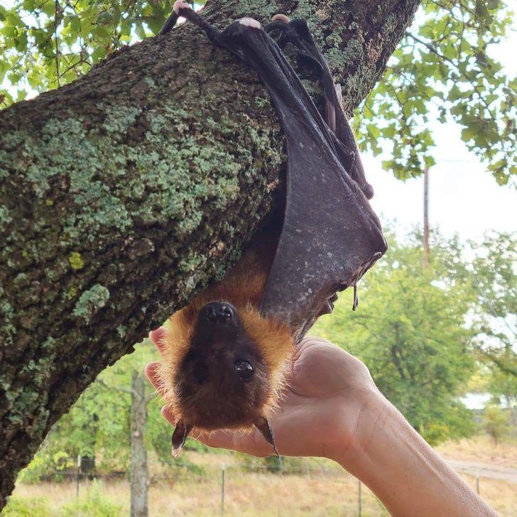 Доказательства того, что летучие мыши милые