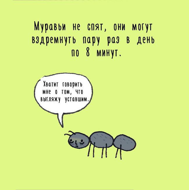 Животные делятся своими секретами