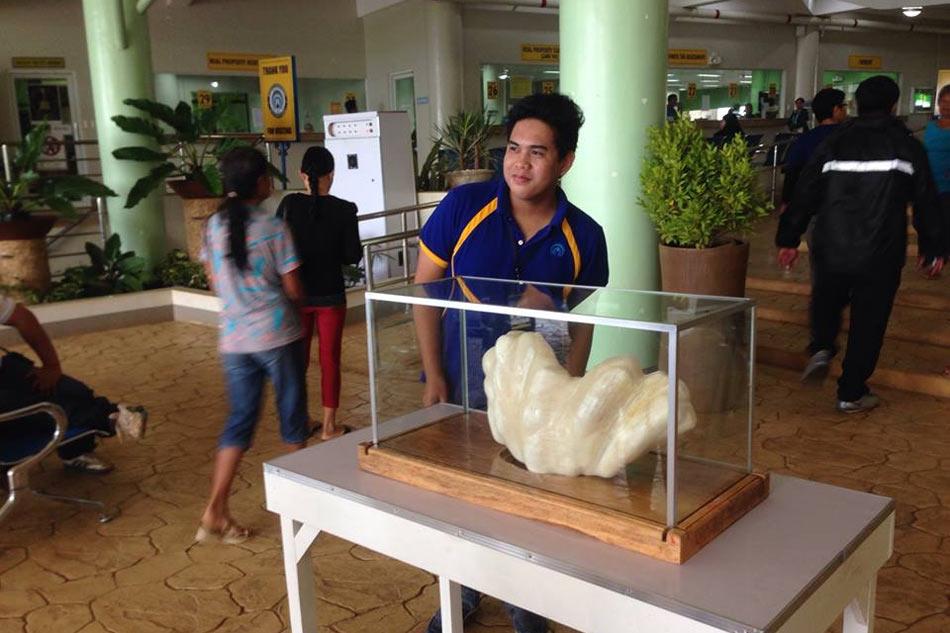Самая большая в мире жемчужина
