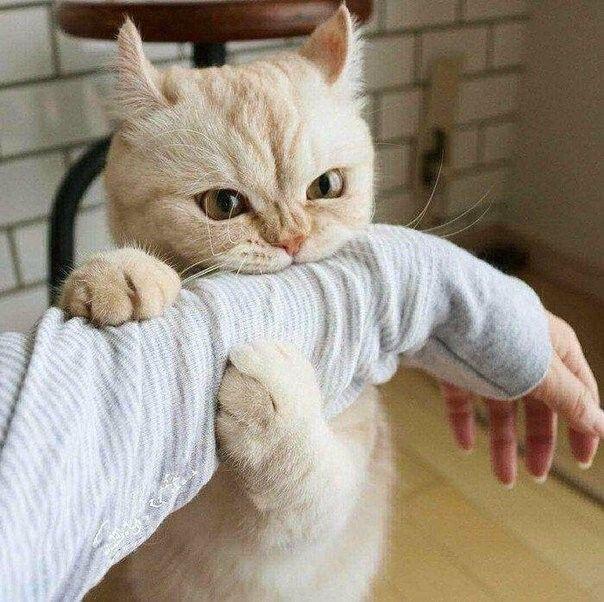 Бог создал кошек, чтобы сбить человечество с толку