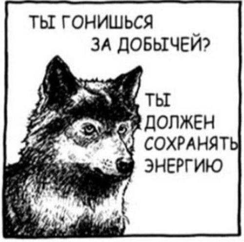 Не вводите животных х в заблуждение!