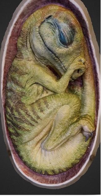 Создали эмбрион тираннозавра