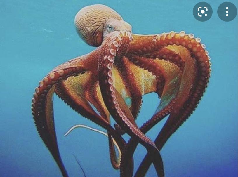 Интересный факт о осьминоге
