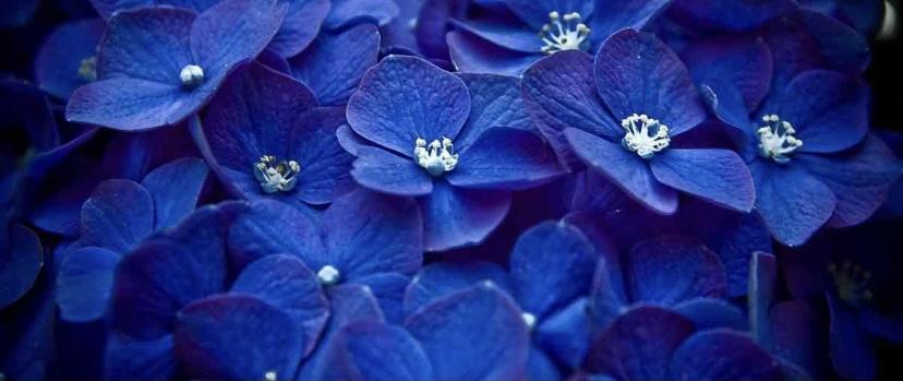 Интересный факт о синем цвете