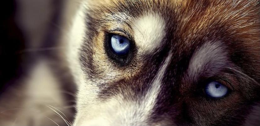 Факт о глазах собаки