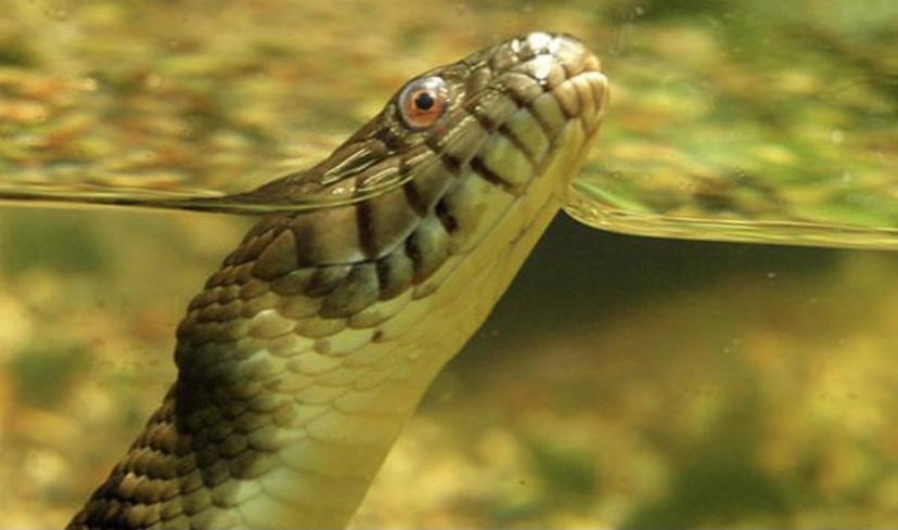 Самая большая змея в целом мире