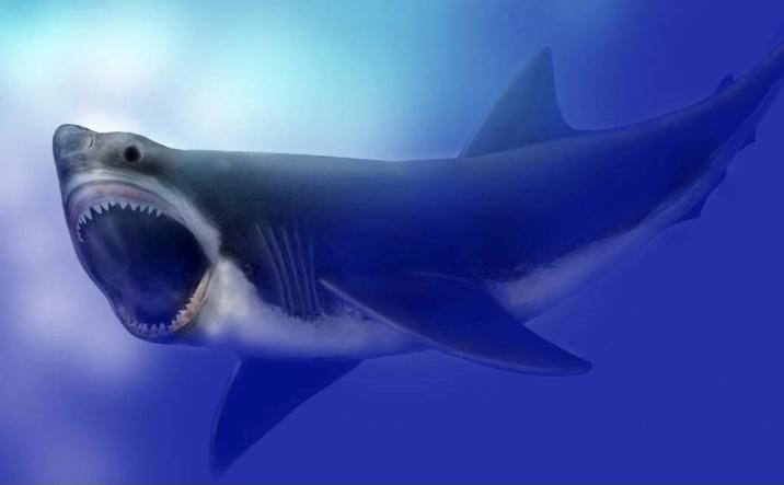 Мегалодон самая большая акула в мире