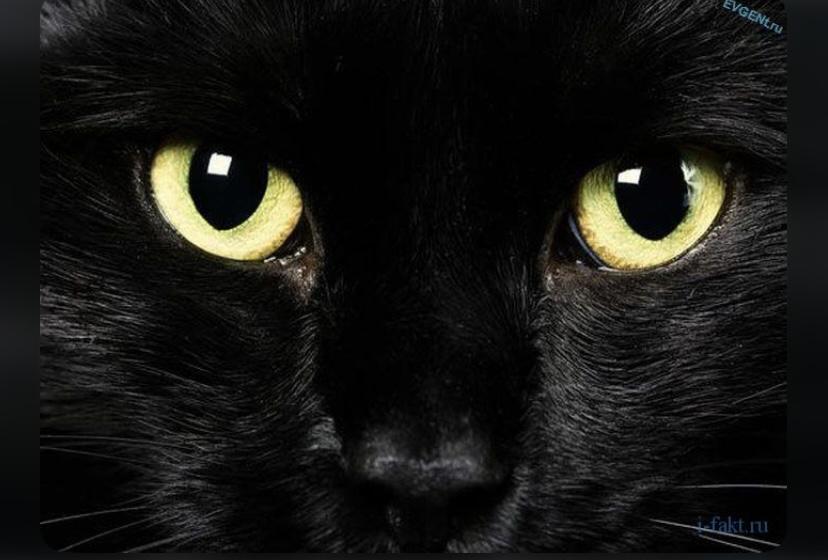 Интересный факт о чёрном цвете