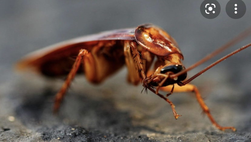 Интересный факт о тараканах