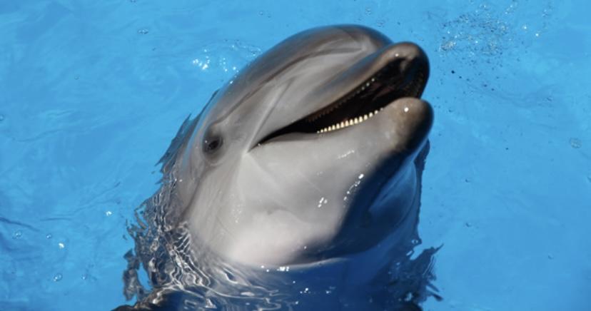 Дельфины и киты факт из жизни