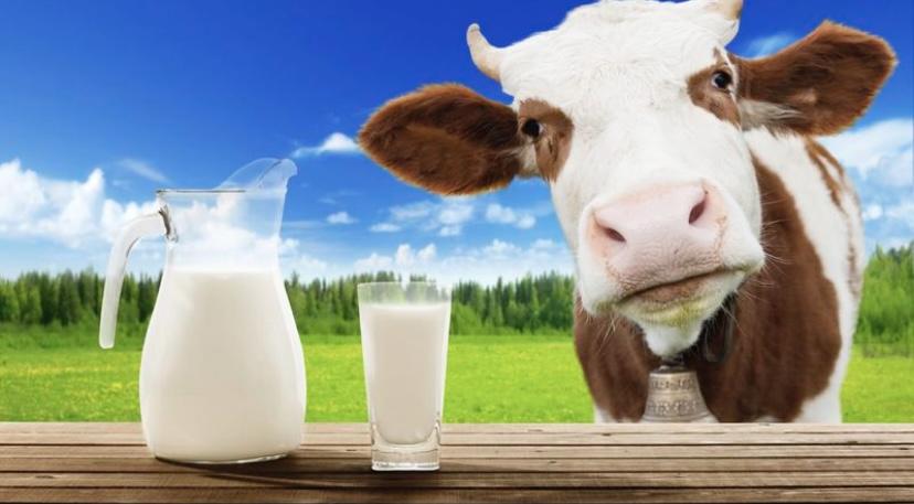 Коровье молоко на первом месте
