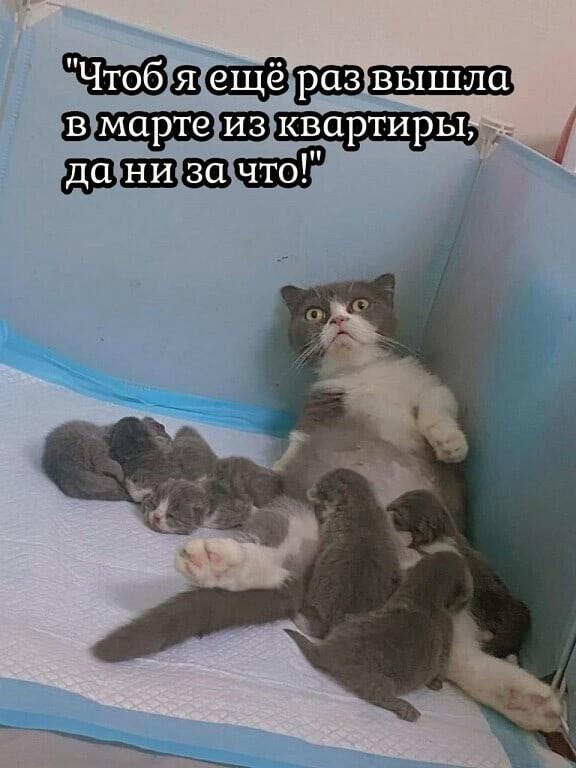 Кошка после марта