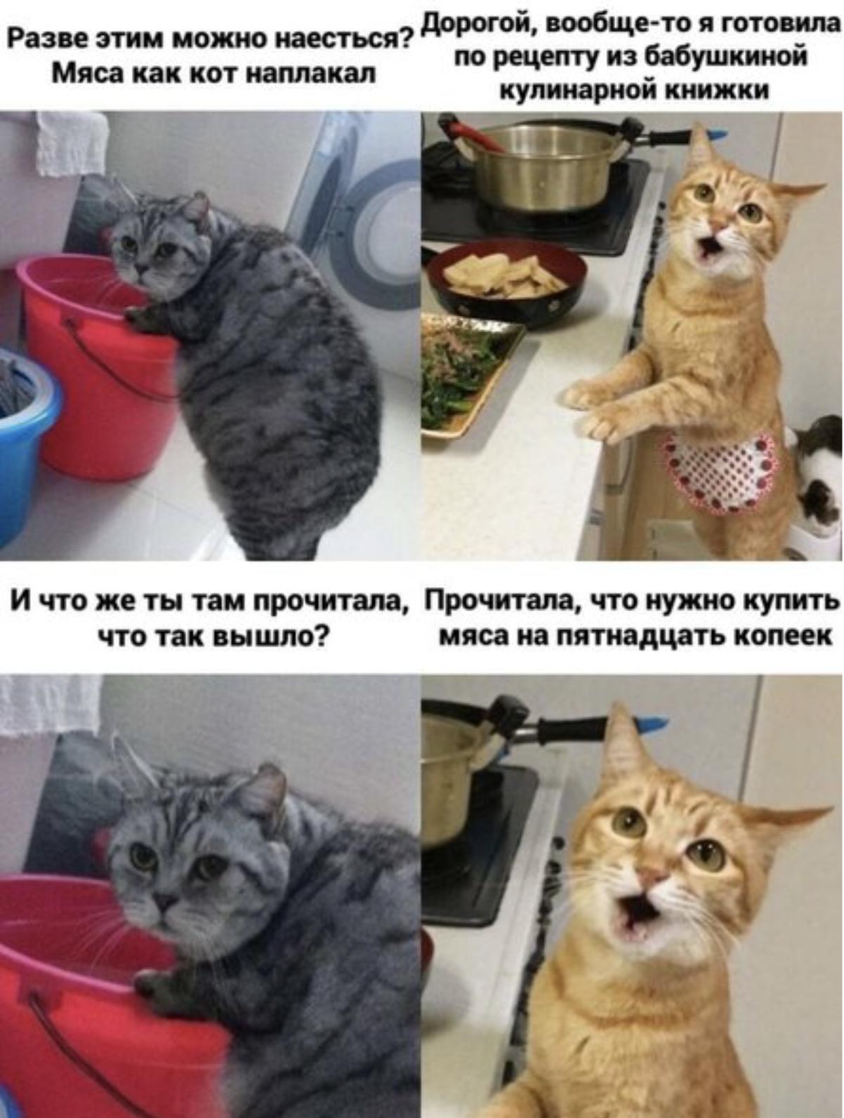 Забавные картинки с котами, которые точно поднимут настроение