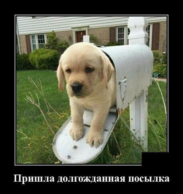 Смешные картинки с собаками