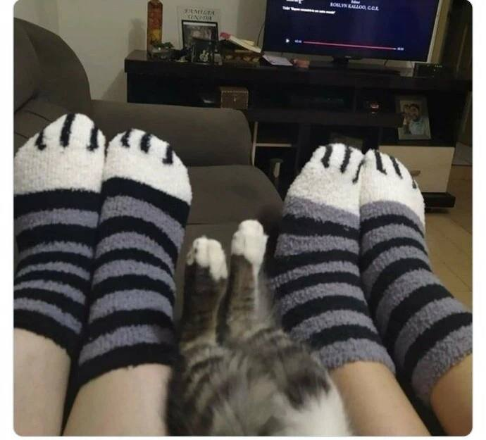 Прекрасные и позитивные котики