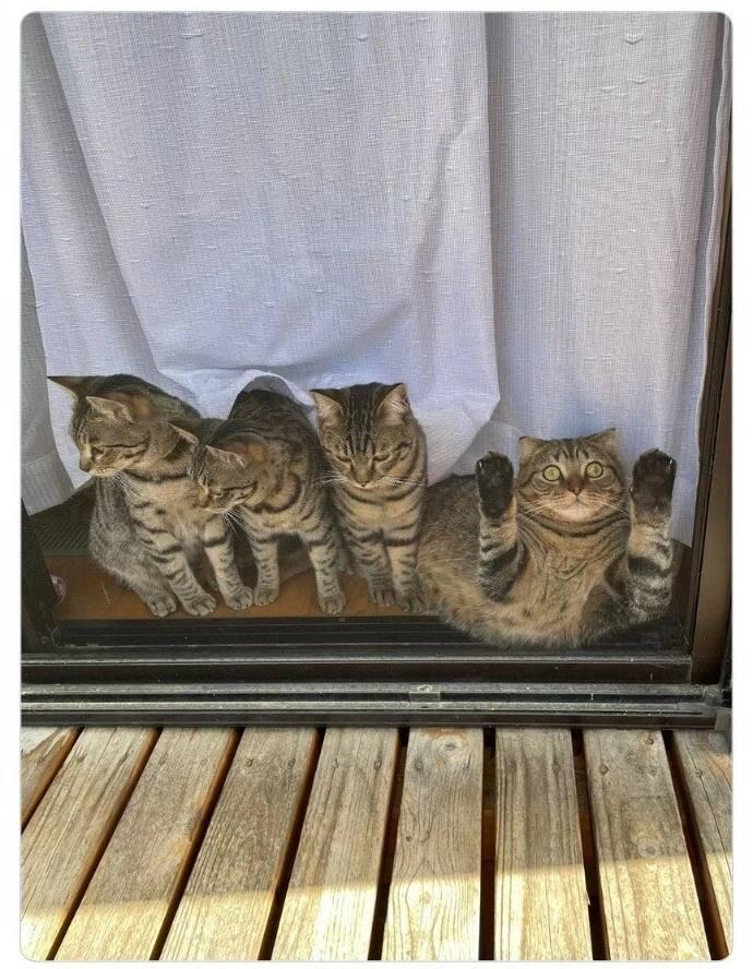 Неповторимый котейка