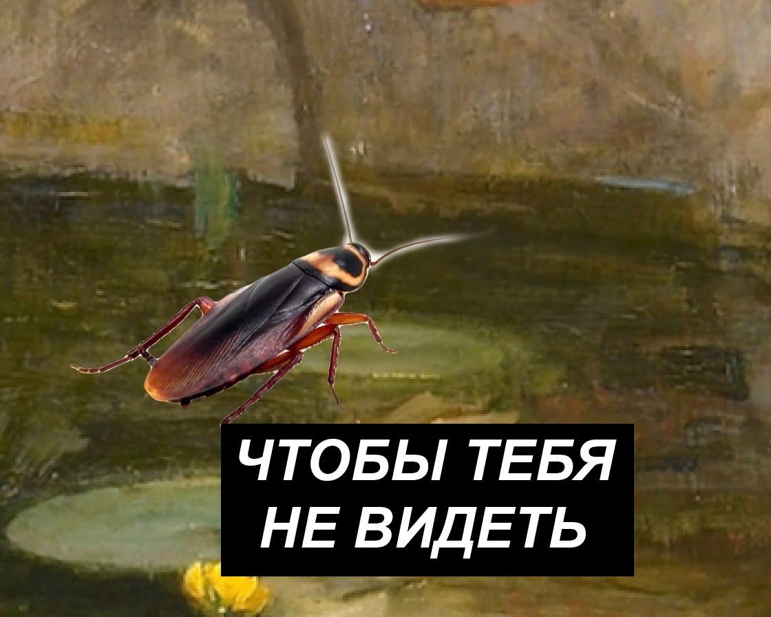 Таракашка-обзывашка