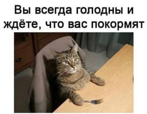 Мы как коты