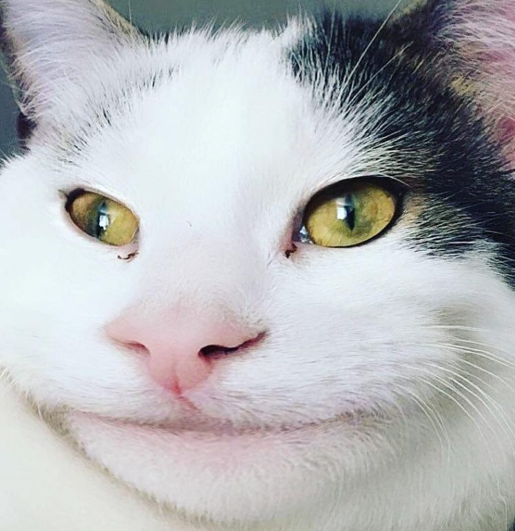 Разоблачение кошки