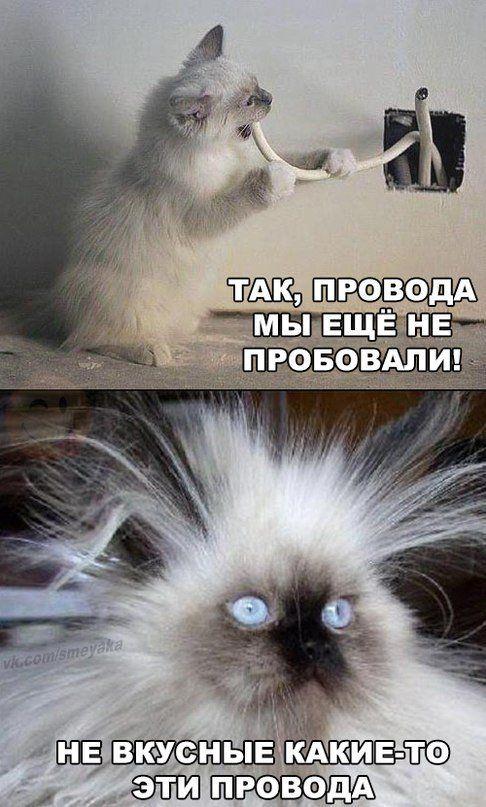 Котики котики и еще раз котики