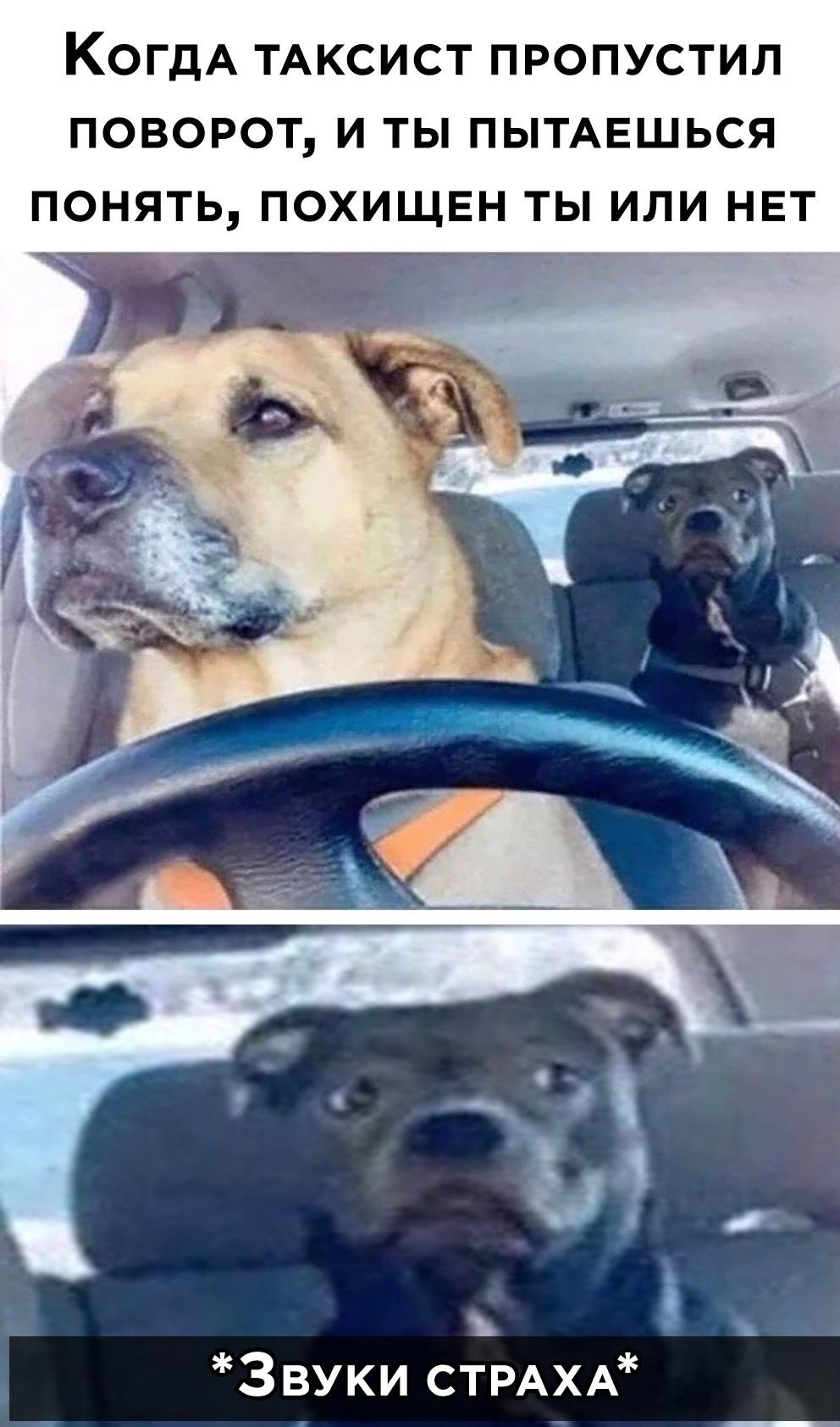 Смешные мемы с животными