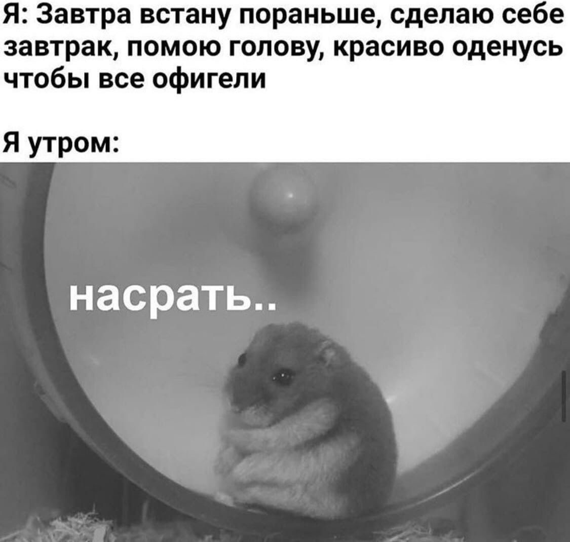 Животные знают лучше