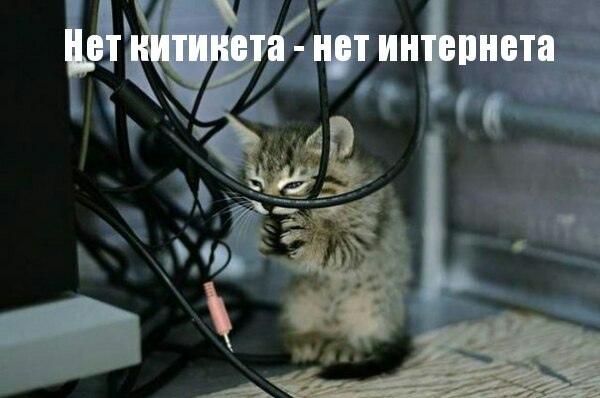 Смешные котики — FUN24.ORG — Прикольные фото, смешные картинки и юмор