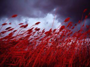 Красный — любимый цвет