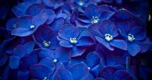 Синий — любимый цвет