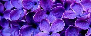 Фиолетовый — любимый цвет