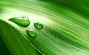 Зеленый — любимый цвет