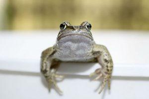 Факт о лягушках
