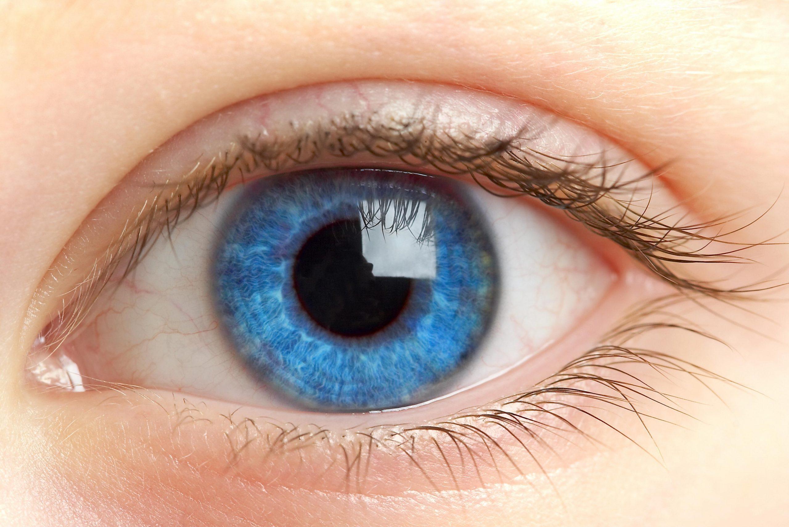 Факт о глазах