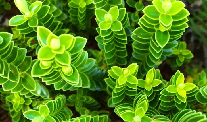Зеленый цвет растений