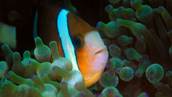 Почему рыбы не дышат на суше?