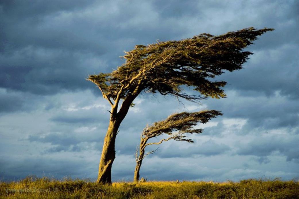 Как ветер помогает деревьям расти?