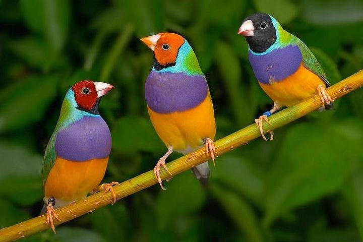«Птицы-рукодельницы»