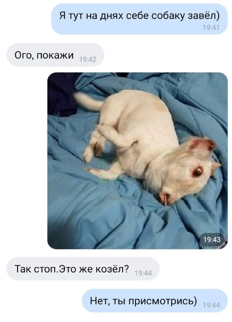 Необычная собака