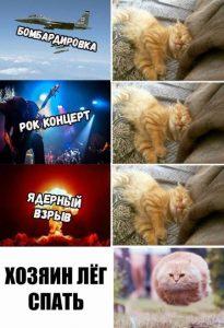 Жизнь с котом