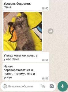 кот Сема