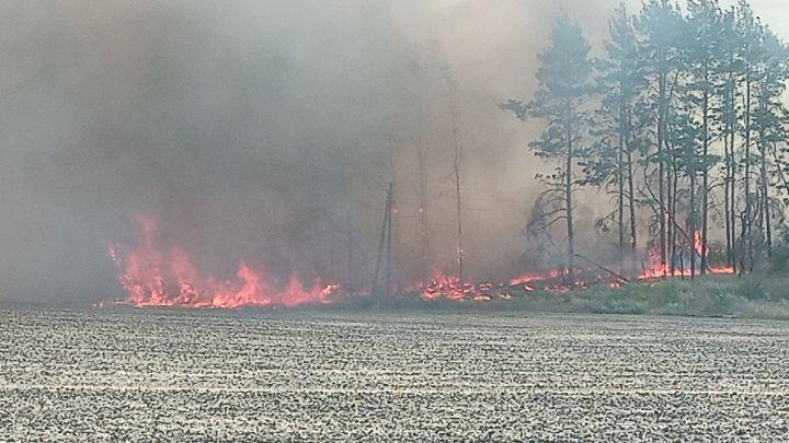 Под Воронежем снова горят леса