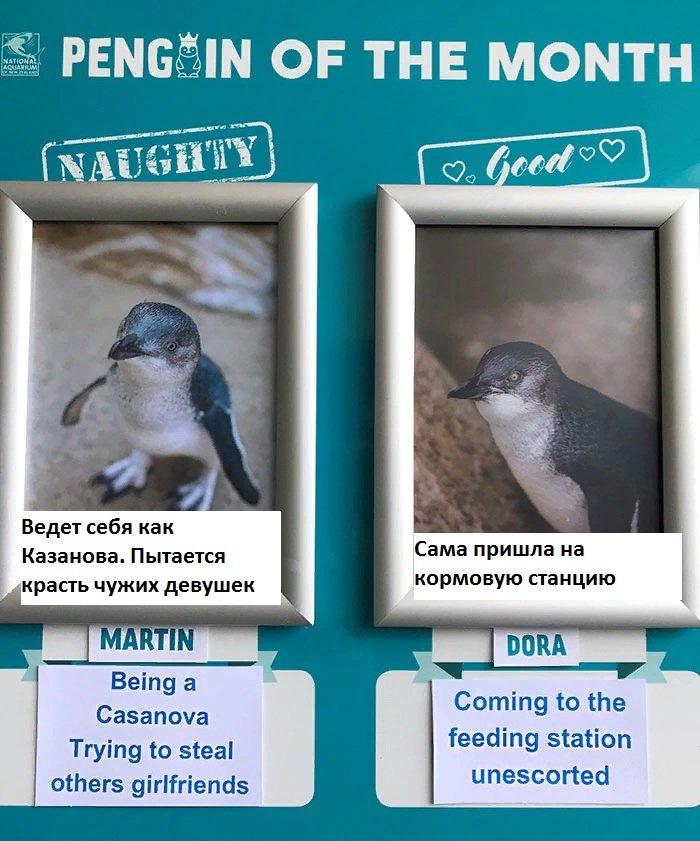 Немного о пингвинах