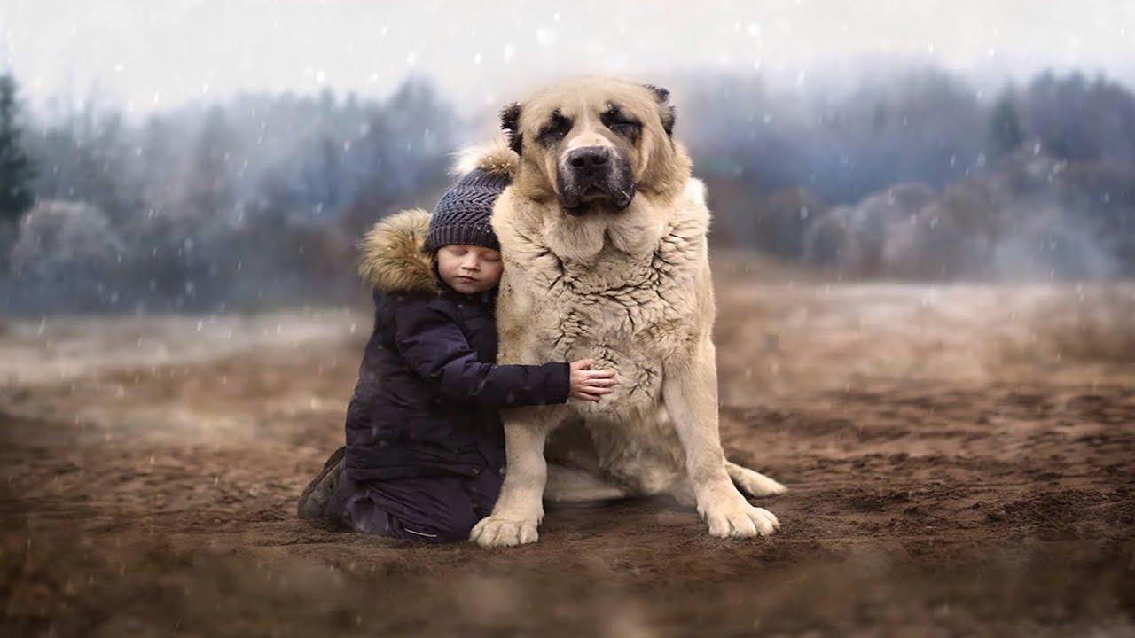 Собака — верный друг