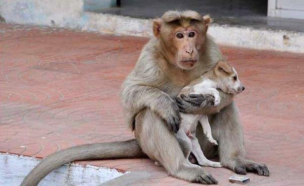Обезьяна «усыновила» уличного щенка и ухаживает за ним как родная мать