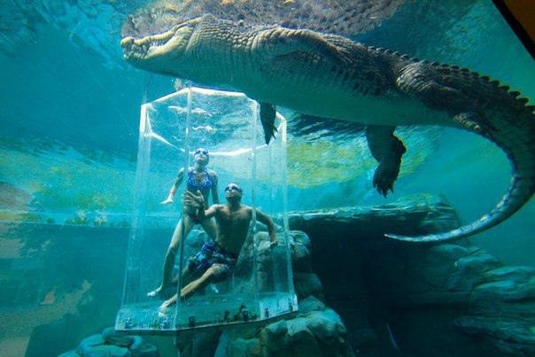 Океанариум в Австралии
