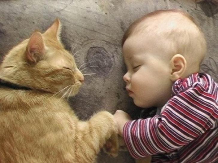 Если рядом кот, все становится особенным